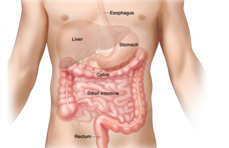 inside the stomach